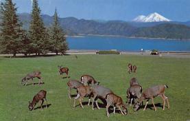 top005429 - Deer Post Card