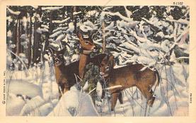 top005437 - Deer Post Card