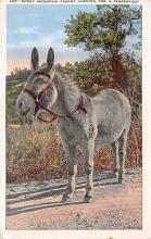 top005439 - Donkey Post Card