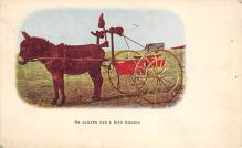 top005441 - Donkey Post Card