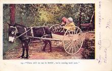 top005451 - Donkey Post Card