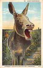 top005453 - Donkey Post Card