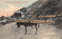 top005459 - Donkey Post Card