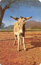 top005461 - Donkey Post Card