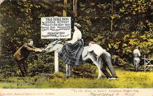 top005463 - Donkey Post Card