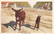 top005465 - Donkey Post Card