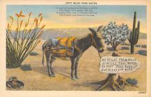top005473 - Donkey Post Card