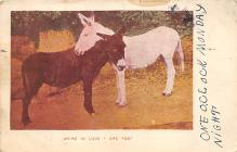 top005475 - Donkey Post Card