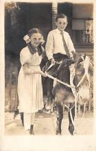 top005479 - Donkey Post Card