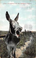 top005491 - Donkey Post Card