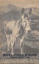 top005493 - Donkey Post Card