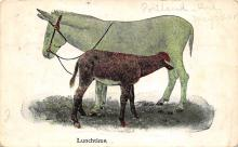 top005497 - Donkey Post Card
