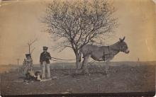 top005503 - Donkey Post Card