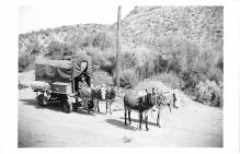 top005505 - Donkey Post Card