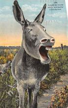 top005521 - Donkey Post Card