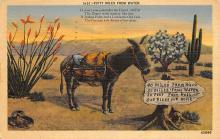 top005531 - Donkey Post Card