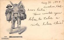 top005533 - Donkey Post Card