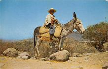 top005545 - Donkey Post Card