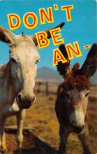 top005551 - Donkey Post Card