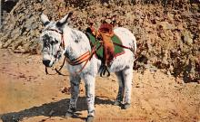top005567 - Donkey Post Card