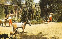 top005583 - Donkey Post Card