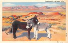 top005589 - Donkey Post Card