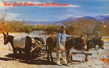 top005591 - Donkey Post Card
