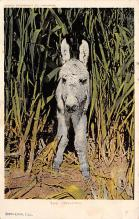 top005597 - Donkey Post Card