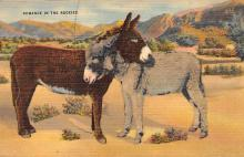 top005603 - Donkey Post Card