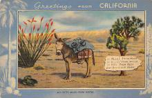 top005605 - Donkey Post Card