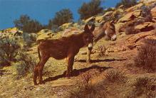 top005619 - Donkey Post Card