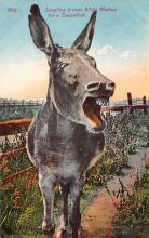 top005621 - Donkey Post Card
