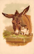 top005627 - Donkey Post Card
