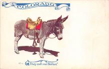 top005629 - Donkey Post Card