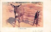 top005633 - Donkey Post Card