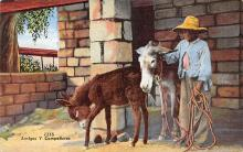 top005641 - Donkey Post Card