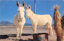 top005643 - Donkey Post Card