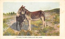top005665 - Donkey Post Card