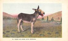 top005675 - Donkey Post Card
