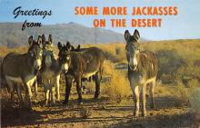 top005677 - Donkey Post Card