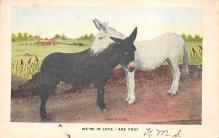 top005683 - Donkey Post Card