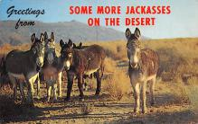 top005701 - Donkey Post Card