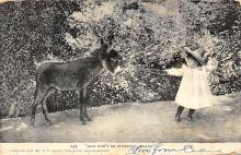 top005703 - Donkey Post Card