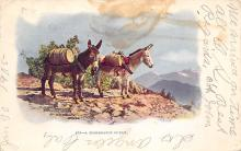 top005705 - Donkey Post Card