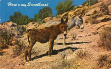 top005711 - Donkey Post Card