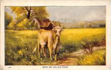 top005745 - Cow Post Card