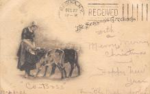 top005761 - Cow Post Card