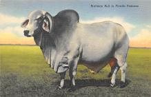 top005935 - Cow Post Card