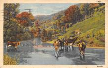 top005943 - Cow Post Card