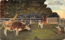 top005945 - Cow Post Card